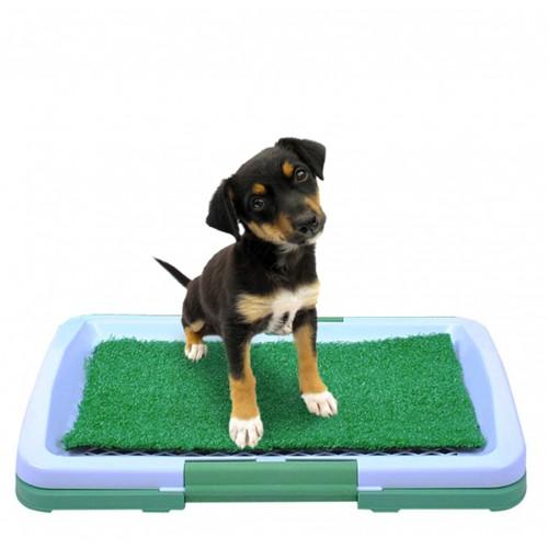 toilettes pour chien litière pour chien